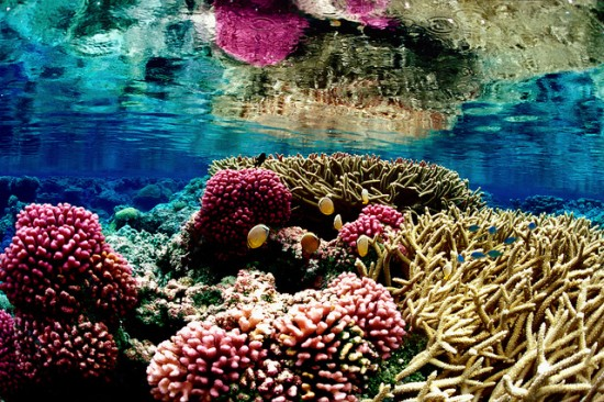 Brightly-colored coral reef